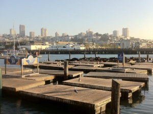 The sea lions started chilling on this dock in September 1989, and have been ever since.