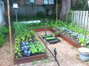 ...And I'll just throw in this one of our friend's amazing garden, complete with motion-sensored animal spraying device.
